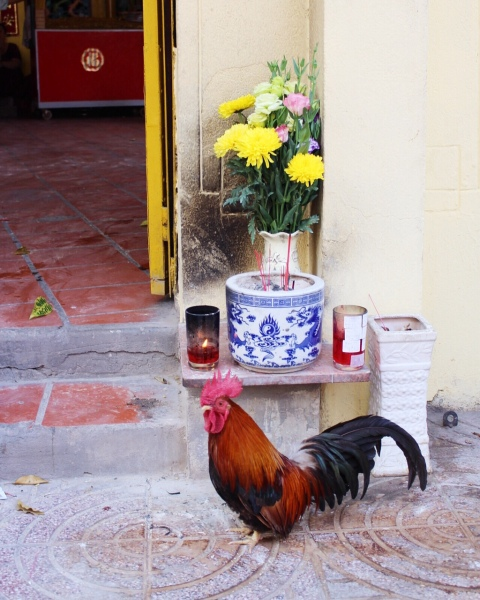 rooster street saigon nguyen du vietnam travel ho chi minh animal ca phe coffee french travel